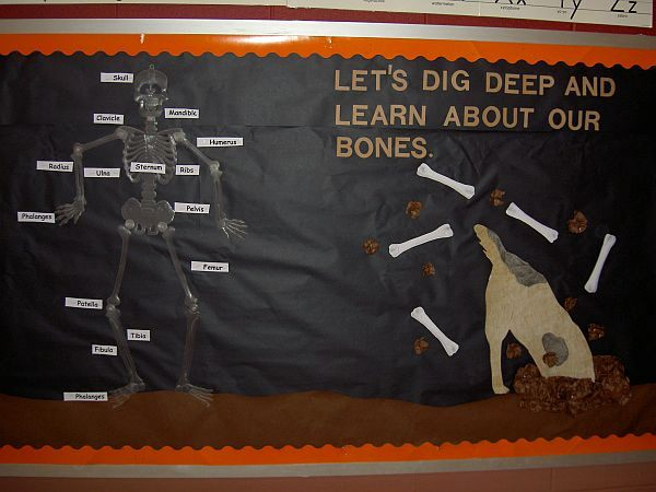 Let's Dig Deep and Learn About Bones Image