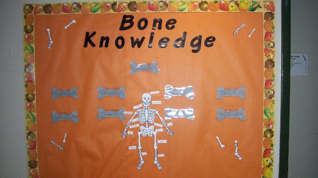 Bone Knowledge Image