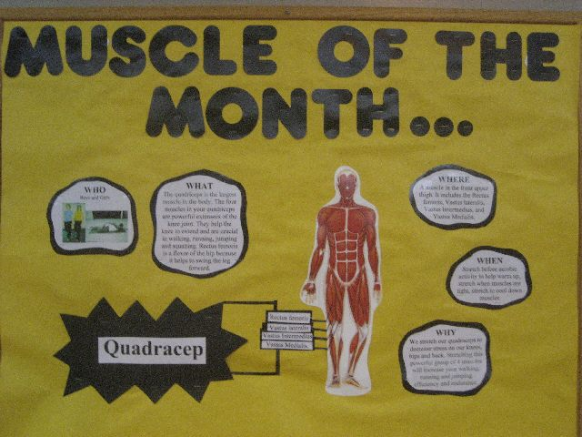 Muscle of the Month Image