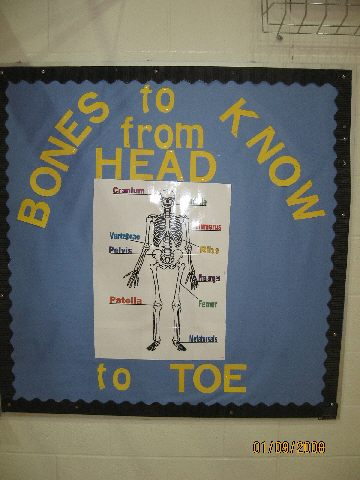 Bones To Know From Head To Toe Image