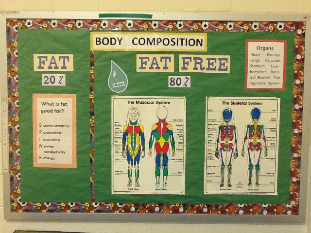 Body Composition Image