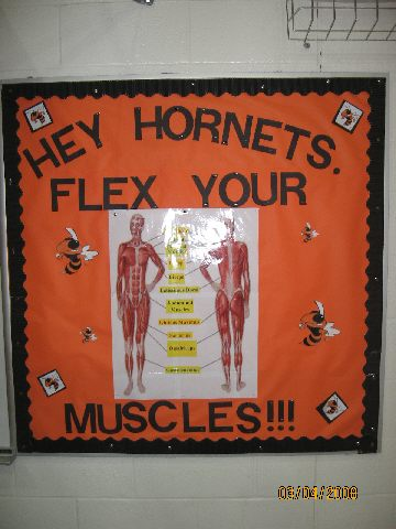 Hey Hornets, Flex Your Muscles! Image
