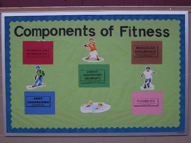 essay on the 5 components of physical fitness