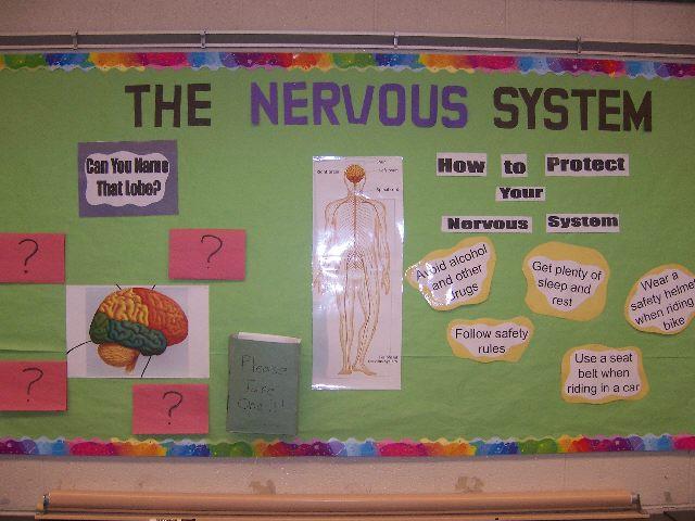 Nervous System Posters Nervous System Image